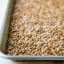 Toasted sunflower seeds on a baking pan.